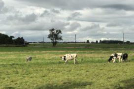 Zuid-Holland: geen woningbouw in groen