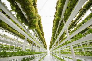 Urban farming schiet wortel in vastgoed