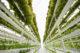 Urban farming foto 1 80x53